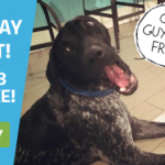 Black Friday BarkBox Deal – The Deal Is Back – 3 Months Free!