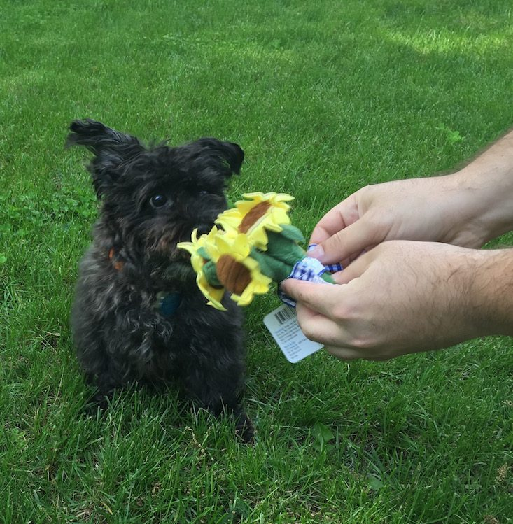 BarkBox Subscription Box Review & Coupon May 2016 - 1200