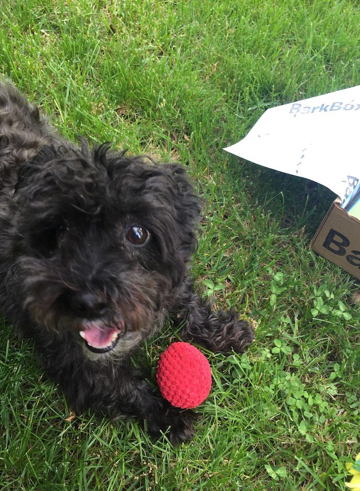 BarkBox Subscription Box Review & Coupon May 2016 - 1240