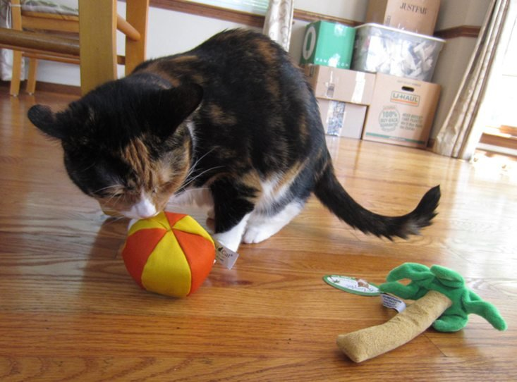catladybox-july-2016-sneakyball
