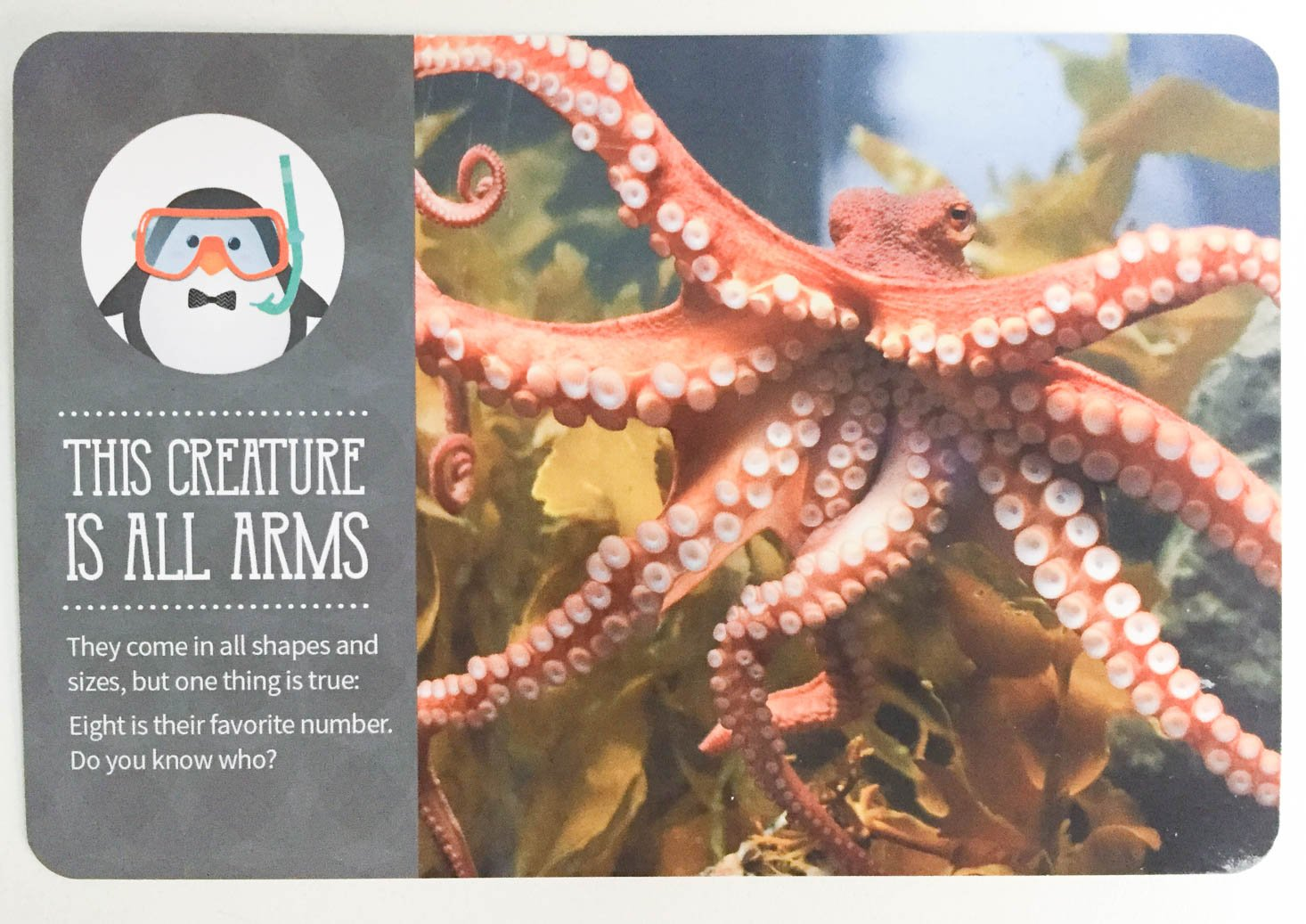 kiwibop-postcard-pals-october-2016-octopus-final