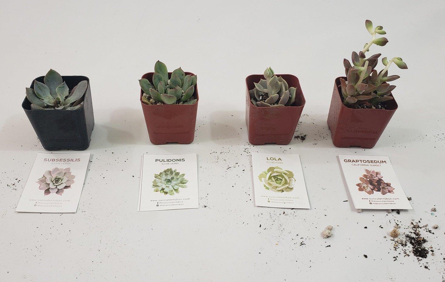 Succulents August 2019 - Review