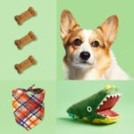 The 14 Best Dog Subscription Boxes of 2020