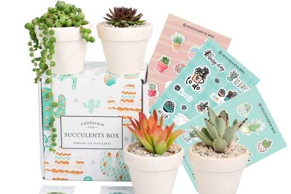 Succulents Box with 4 potted succulents