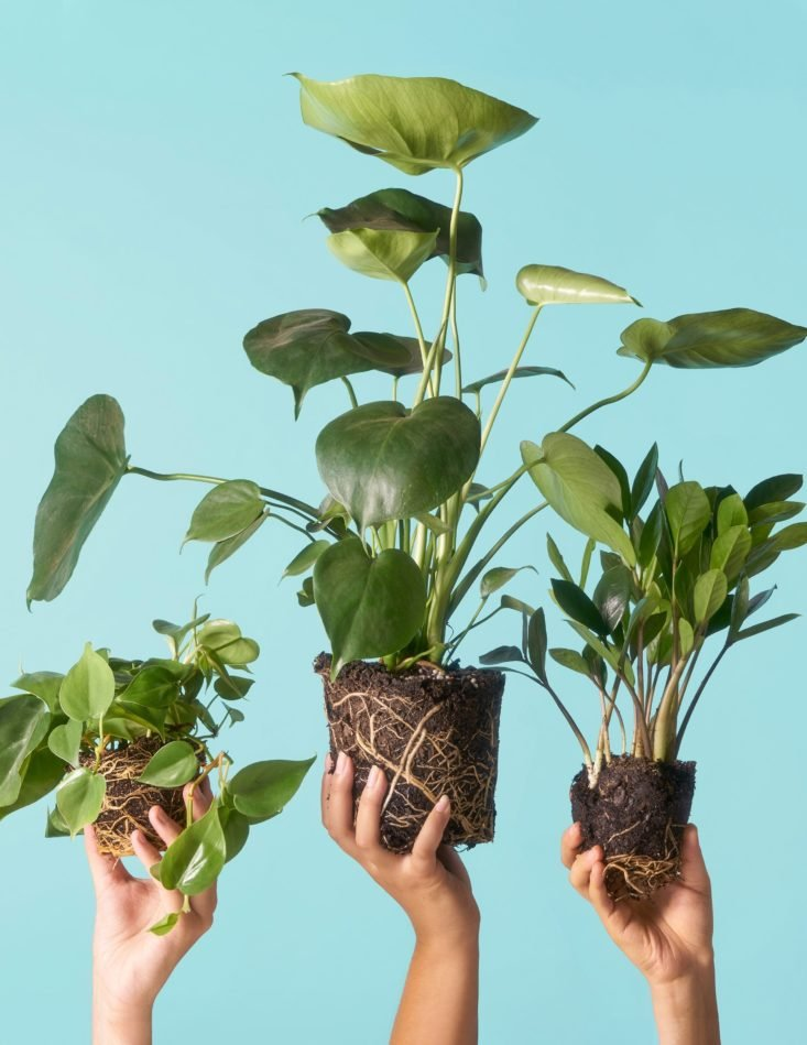 Image of The Sill monthly garden subscription plants.