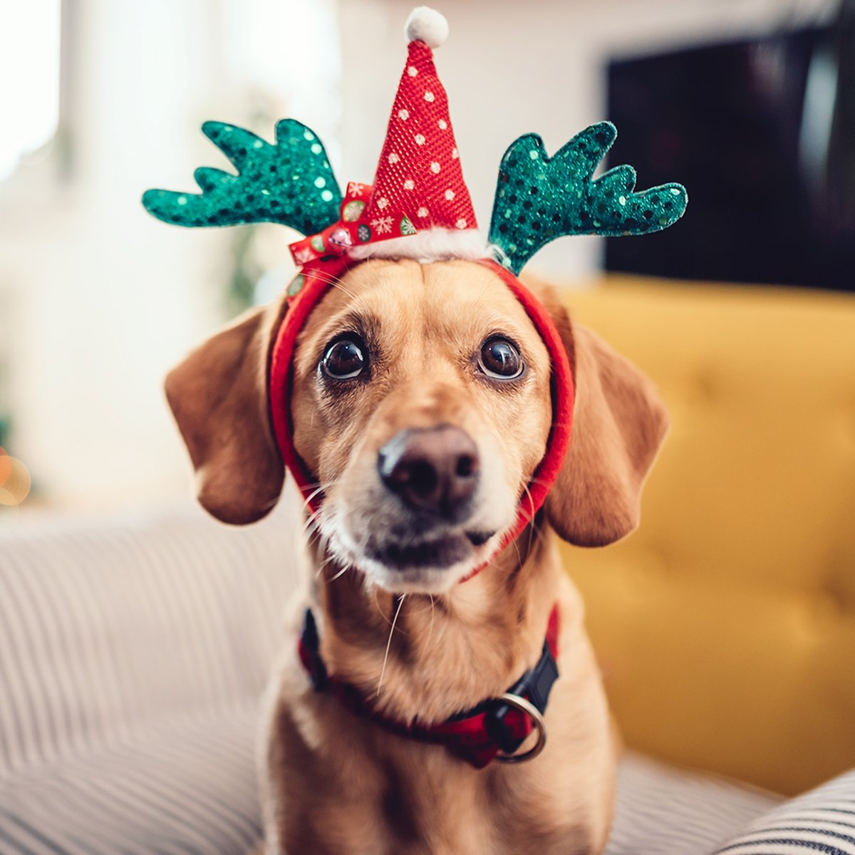 Subscription Gifts for Your Dog (Don't Forget Your Best Friend This Holiday)