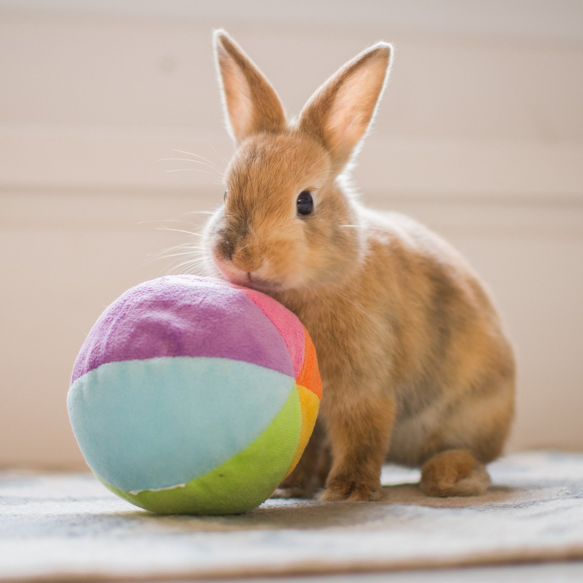 Mr. Hoppy Golightly's Favorite Bunny Subscription Boxes